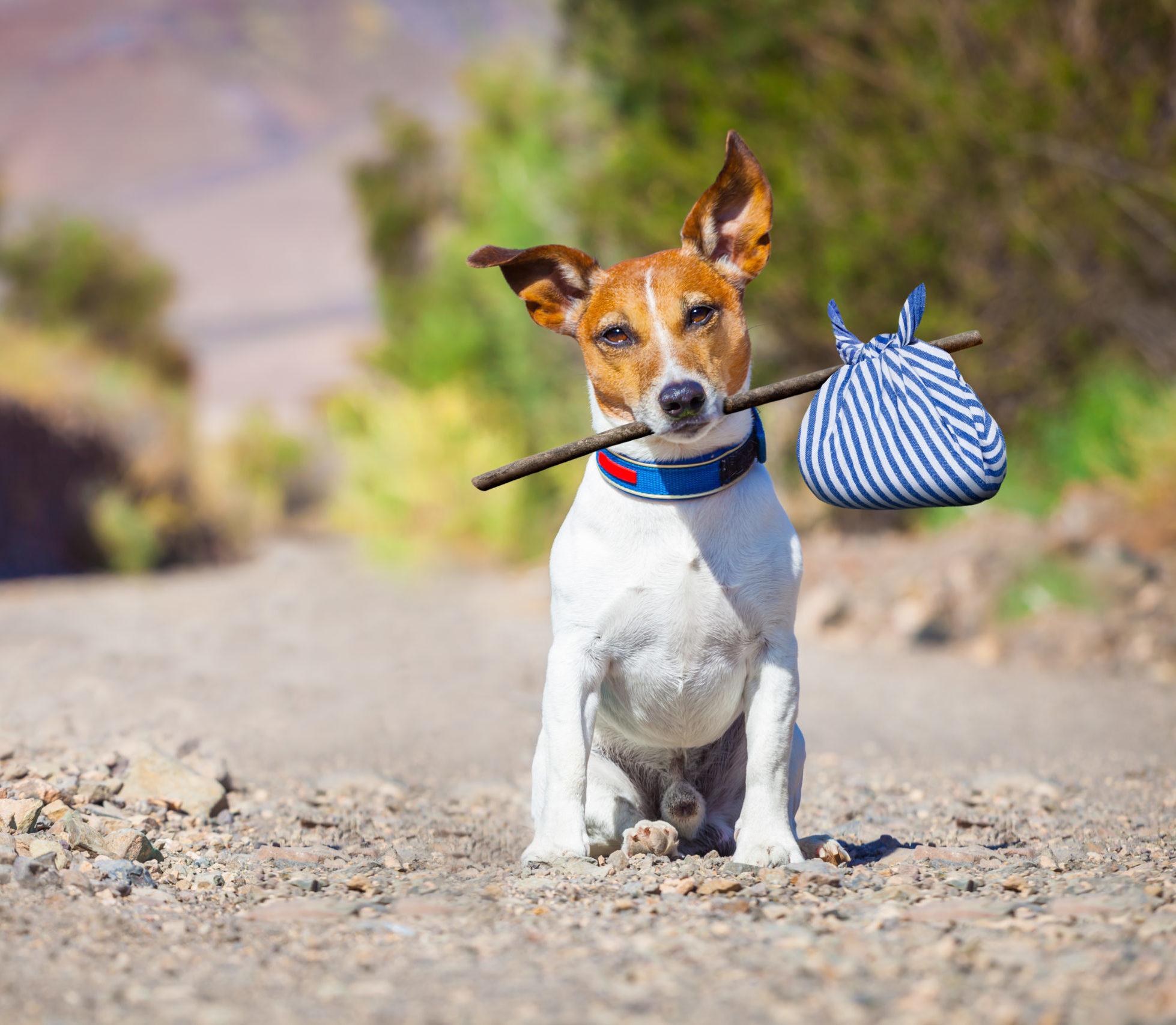 Perros abandonados encuentran hogar en Canadá: The Dog-Go Project lo hace posible