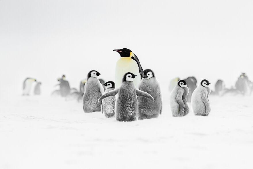 Tokyo International Foto Awards: ve las impactantes fotos de naturaleza