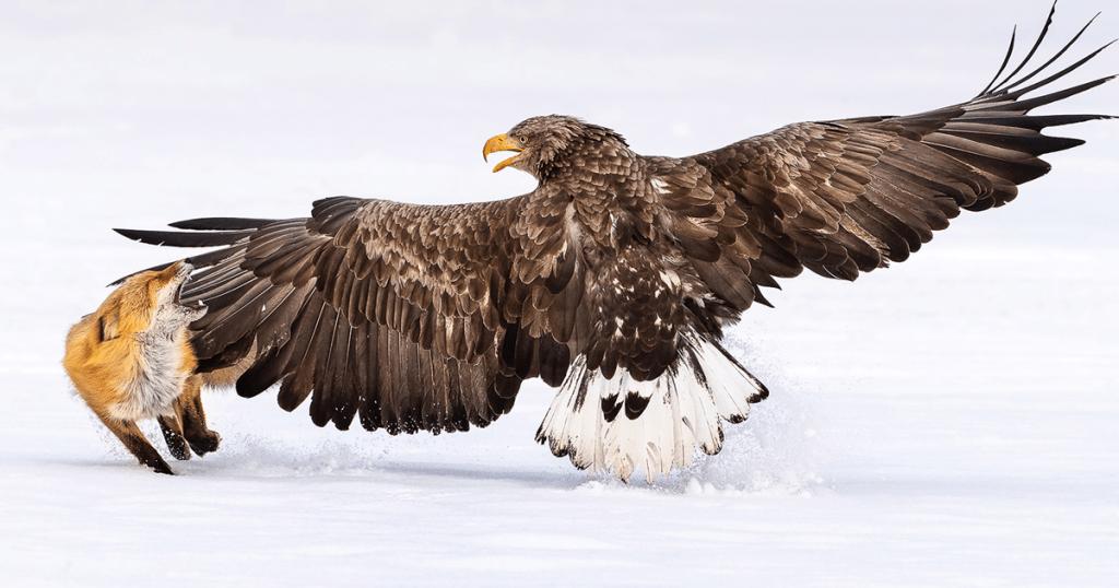 Estas son las fotos de aves más bellas (y sorprendentes) del mundo