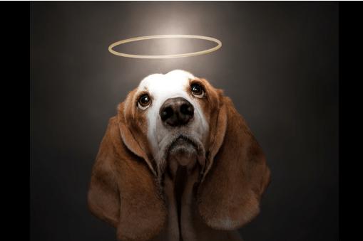 San Roque: Santo patrono de los perros y de las enfermedades
