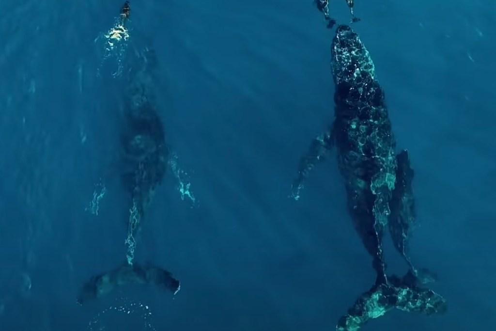 Seaspiracy: 5 razones para ver el documental que está cambiando al mundo
