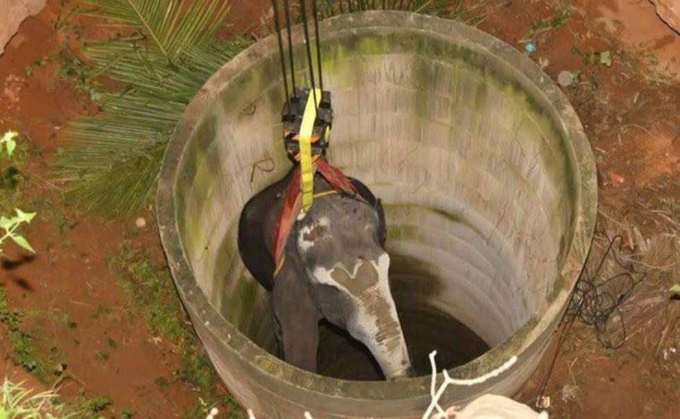 Sorprendente rescate de un elefante que cayó a un pozo