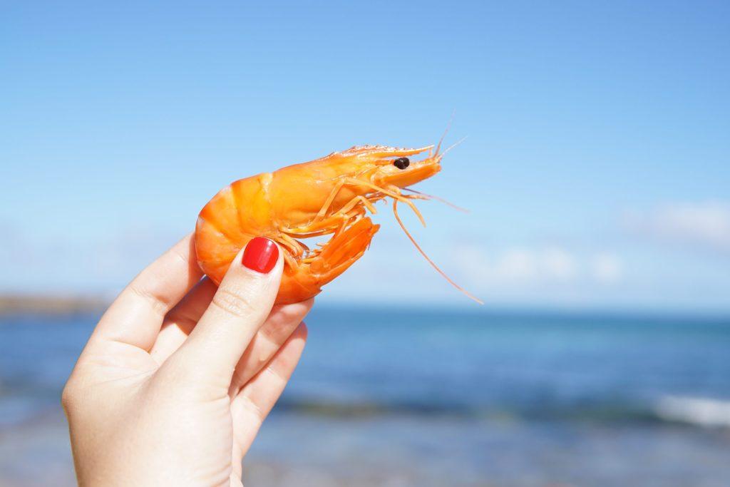 ¿Por qué México ya no podrá exportar camarón a Estados Unidos y qué tiene que ver con las tortugas marinas?