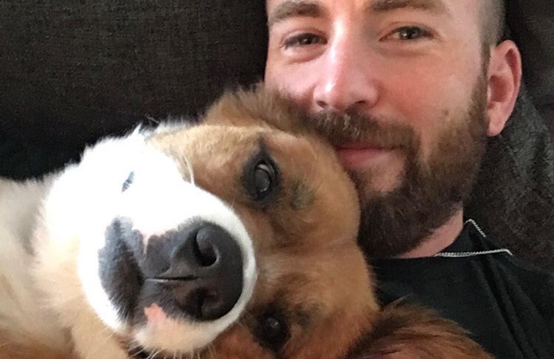 VIDEO: Chris Evans comparte el conmovedor momento en que adoptó a su perro Dodger
