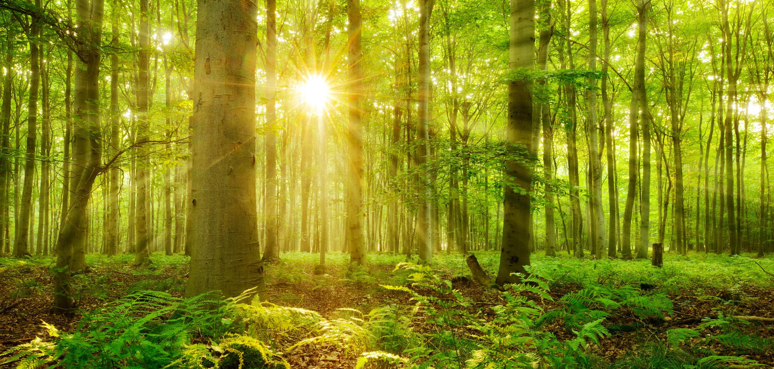 Opinión: Un lugar para conectar con la naturaleza