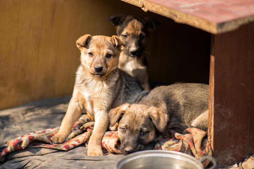 Conoce Dogtores, la colonia para perros sin hogar en Puebla