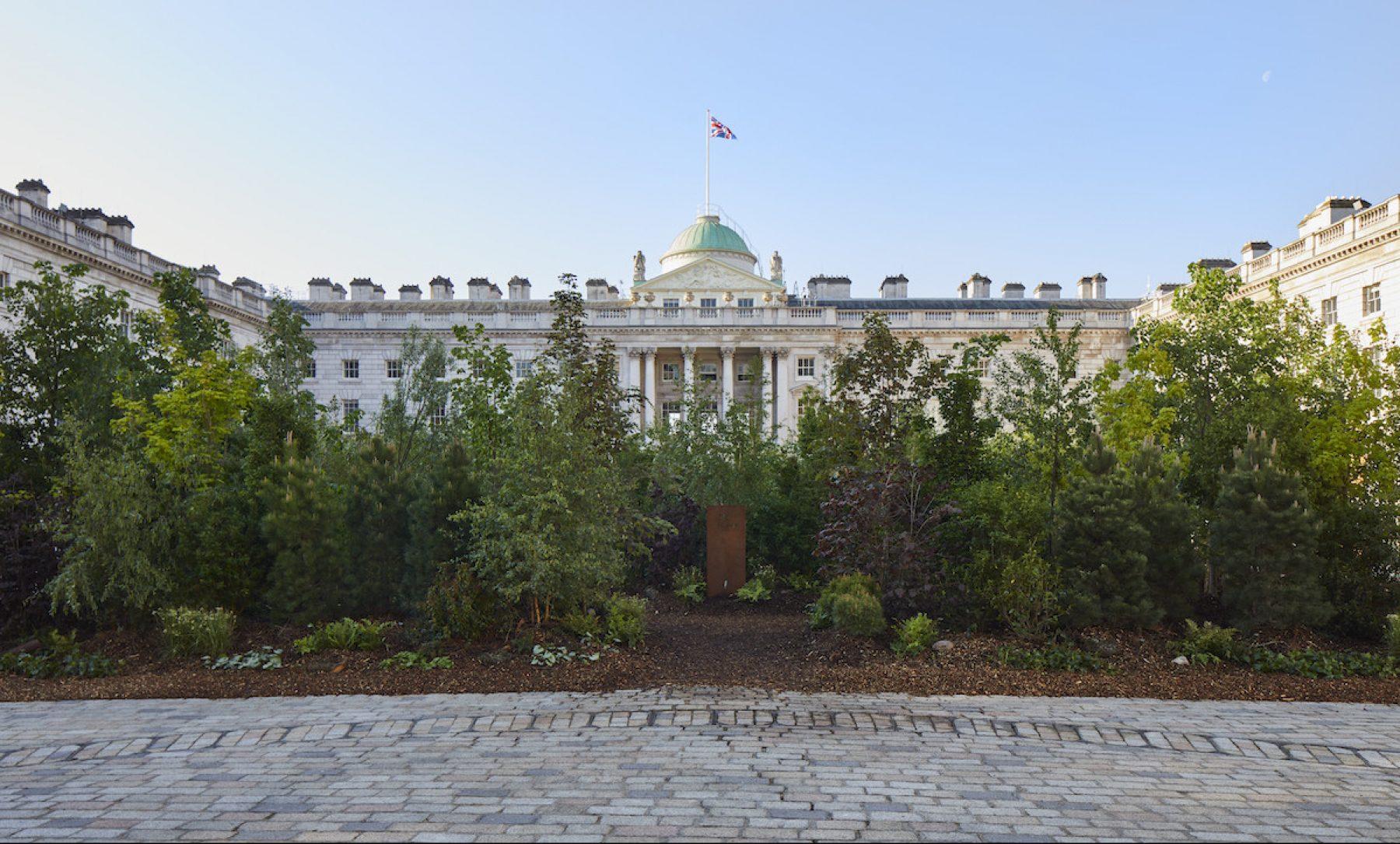 Un bosque «devora» un palacio entero en Reino Unido. ¡Mira cómo pasó!
