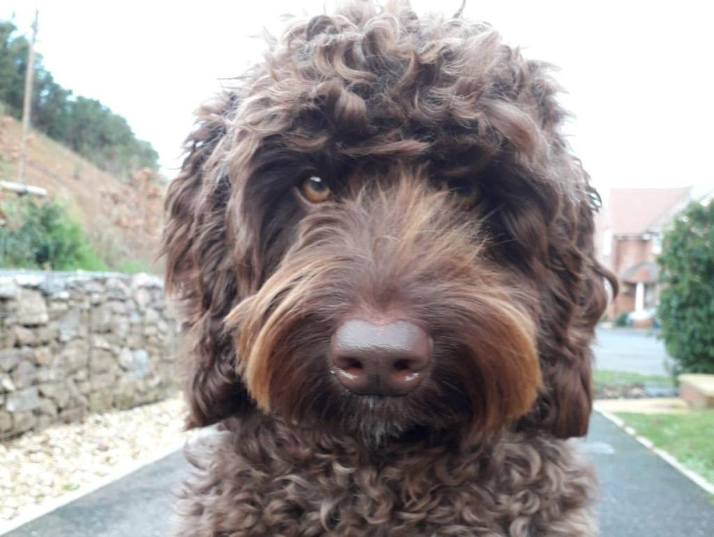 El es digby el perro terapeuta