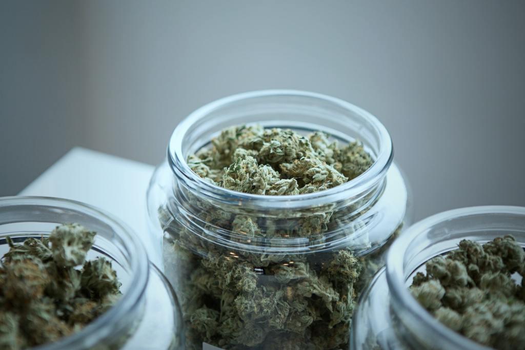 El cannabis podría ser un negocio millonario