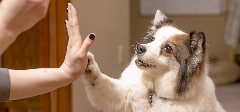 Tu perro es tu mejor amigo, trátalo bien