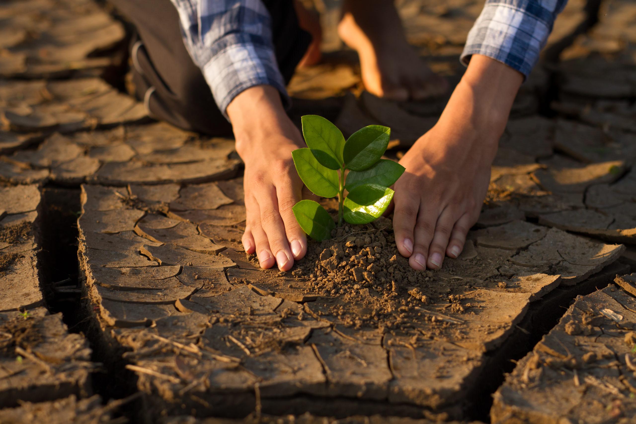 #GeneraciónRestauración: La campaña de la ONU para rescatar los ecosistemas