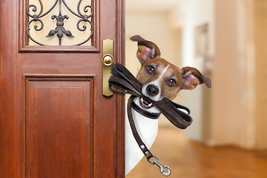 Trucos infalibles para educar mejor a tu mascota