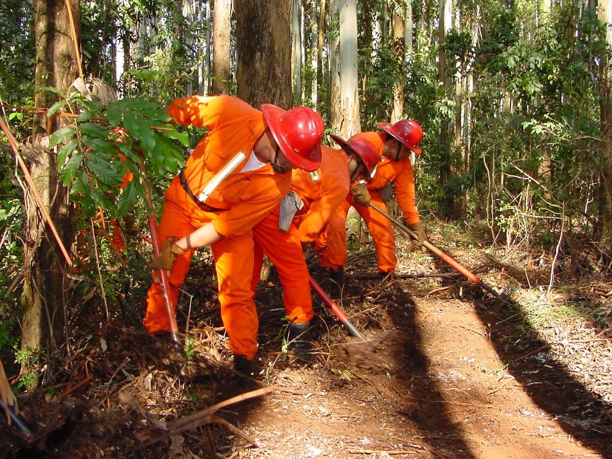 Silvicultura: cuando la economía y el medio ambiente se unen por el bien común