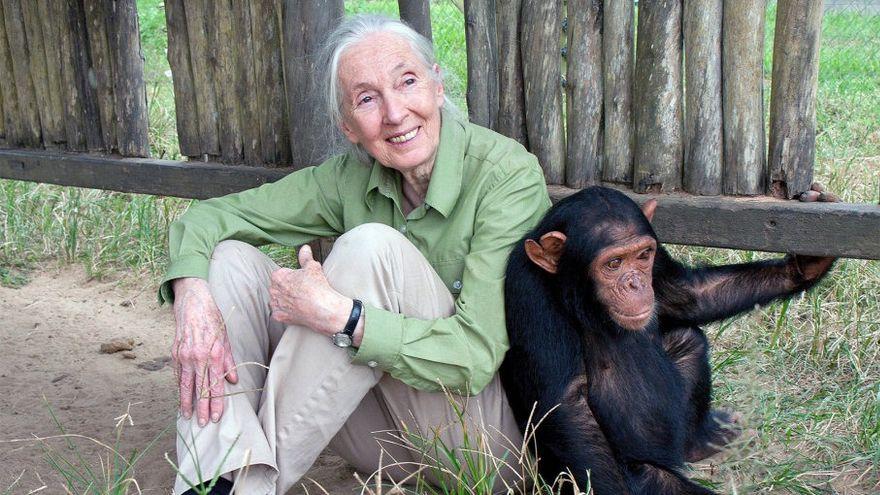 Los chimpancés: la razón de vida de Jane Goodall