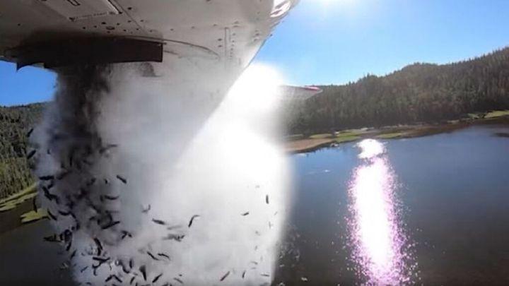 Siembran peces en lagos en Utah para repoblarlos
