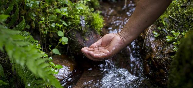 cuidar el medio ambiente es tarea de todos