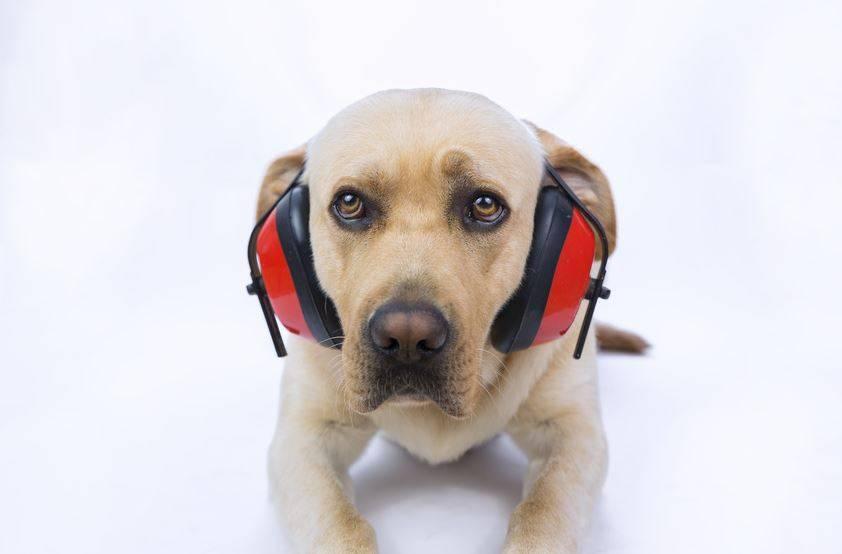 Confirmado: el ruido extremo provoca ataques de pánico en los perros