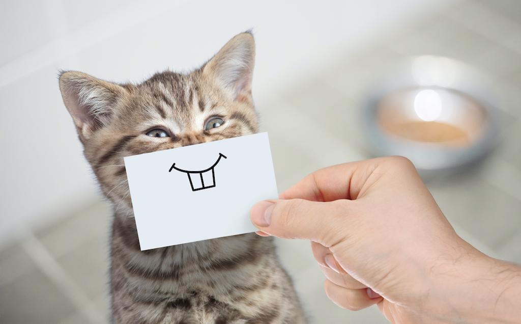 Por qué los gatos son el mejor tratamiento antiestrés que podemos tener en casa