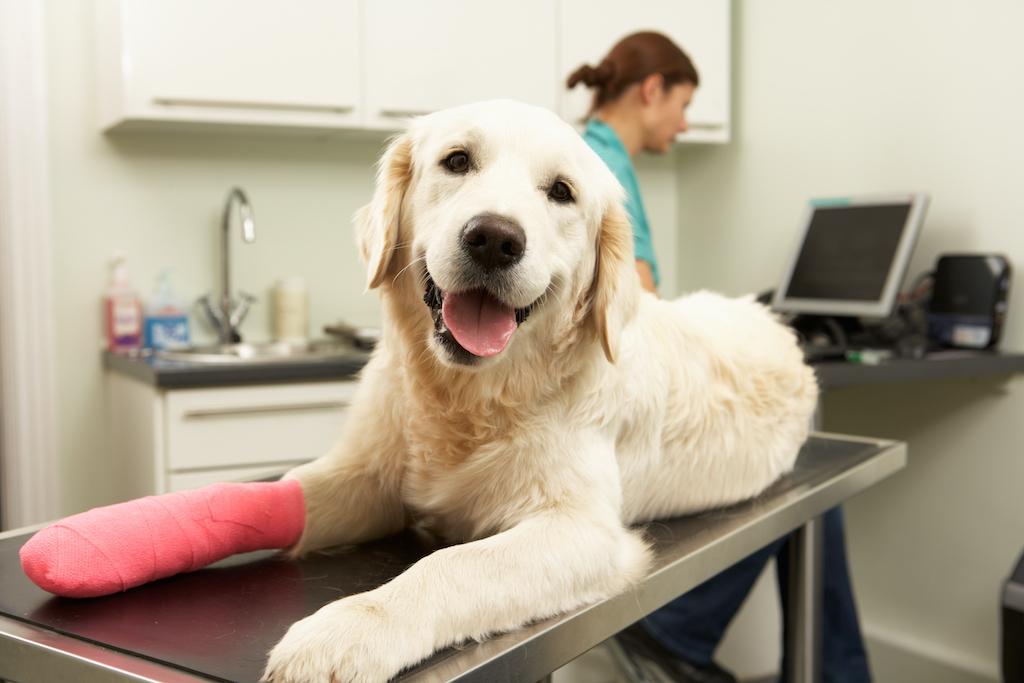 ¡Conoce todo sobre los seguros médicos para mascotas!