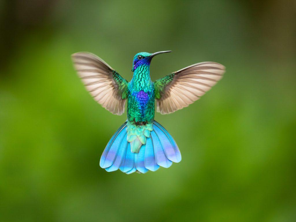 Esta iniciativa de la UNAM ¡pretende salvar a los colibríes del cambio climático!