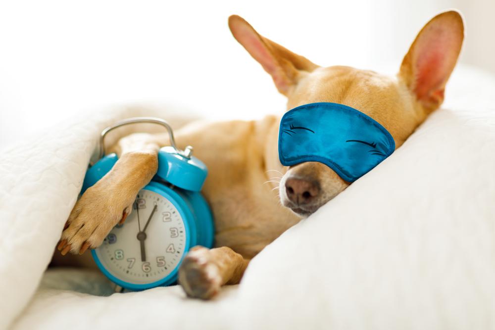 6 tips para despertar temprano y con más energía