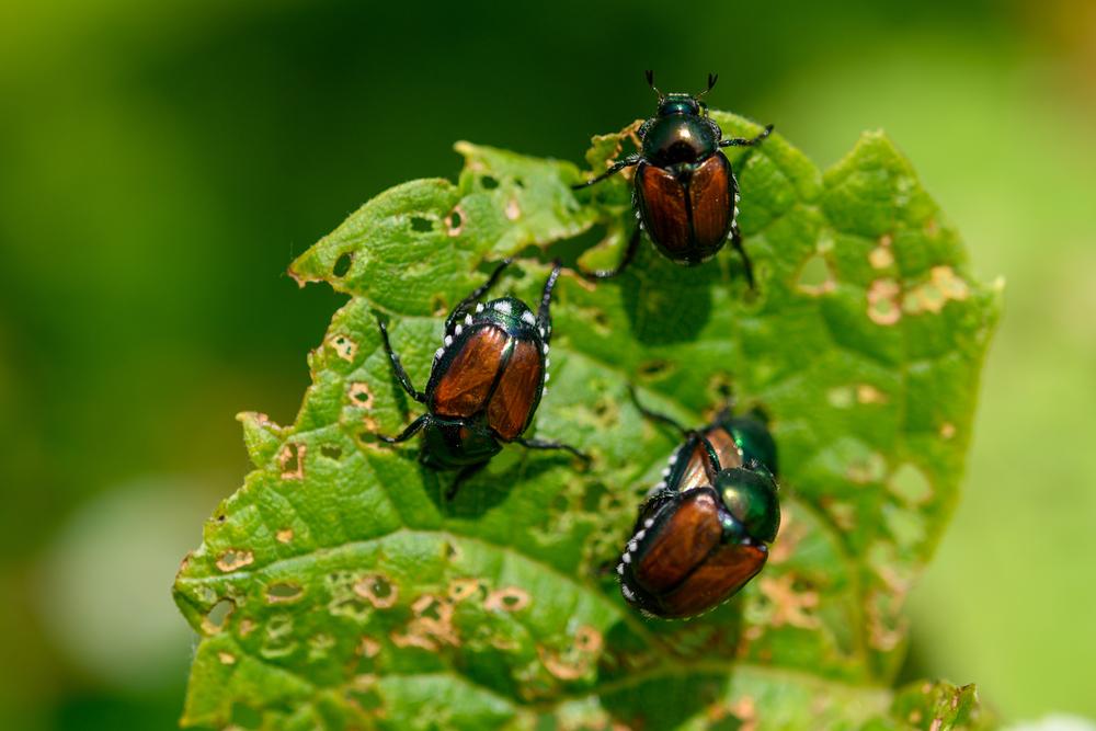 Estos 5 insectos tienen propiedades medicinales ¡increíbles!