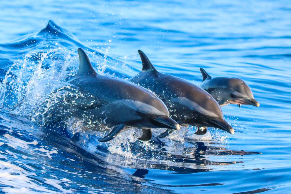 Delfines salvan a nadador que quedó varado en el mar por más de 12 horas