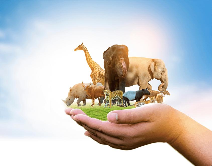 Día Mundial de los Animales: la importancia de la biodiversidad para el planeta