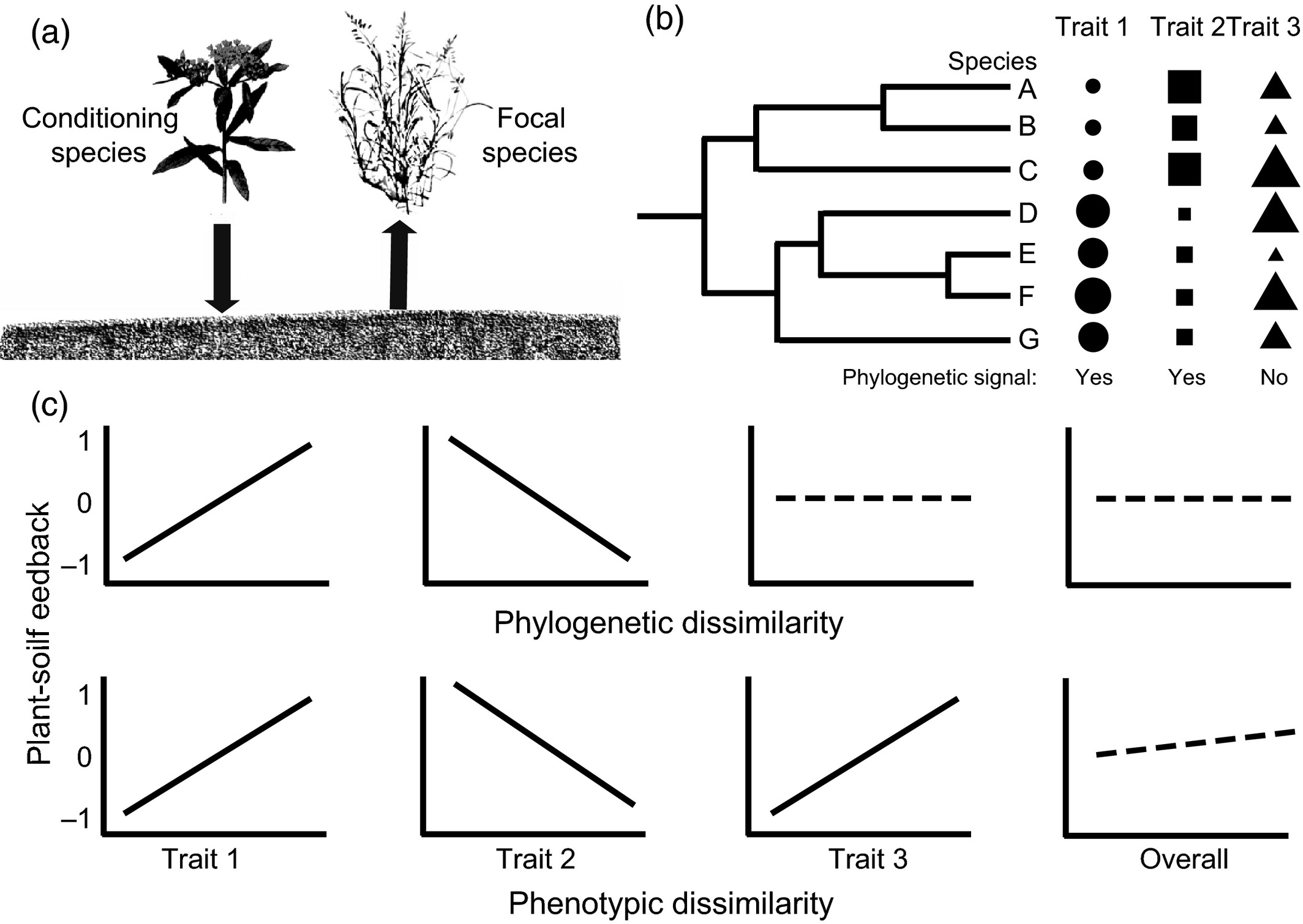 Phylogenetic relatedness, phenotypic similarity and plant
