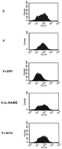NADPH oxidase activity is required for endothelial cell