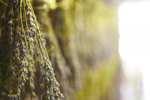 lavender retail partners 2