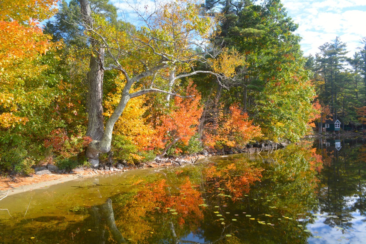 The Truth About Fall Foliage In Maine  Wolf Cove Inn