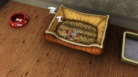 Felis sleeping