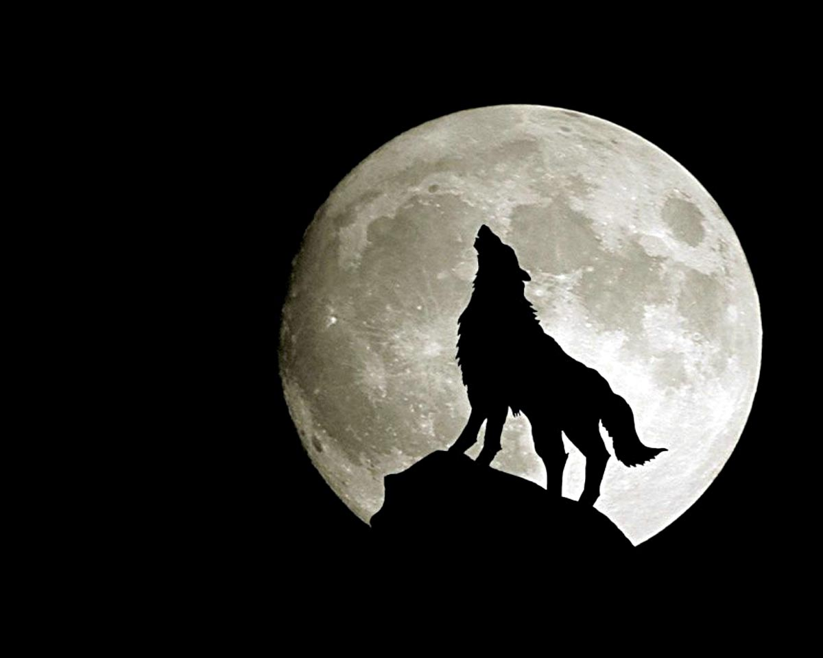 wolf pictures cool images