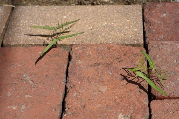 sprawling-seedlings