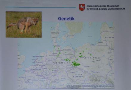 Genetische Verbreitung der Zentraleuropäischen Tieflandpopulation (Foto: Vogler)