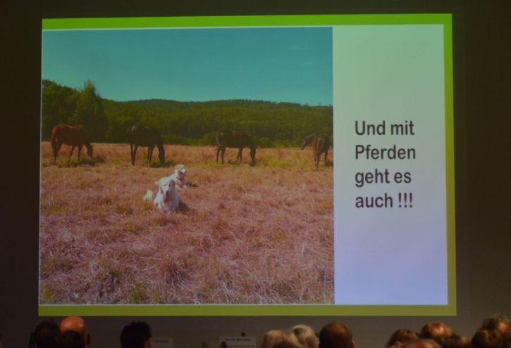"""Nicole Benning: """"Herdenschutzhunde und Pferde sind kein Widerspruch""""... (Foto: Vogler)"""