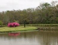 Beautiful Azaleas and lagoons are everywhere