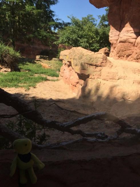 Buddy-Such-Bilder (Im Zoo) - Wolken Sternchen