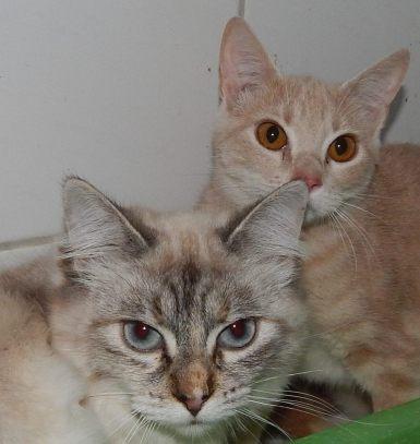 Linette und Tilda