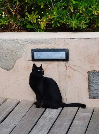 Katze in Puerto de Sollér