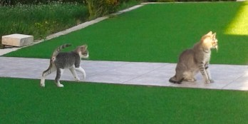 Katzen14