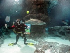 Scuba Tennis – combining two sports into one