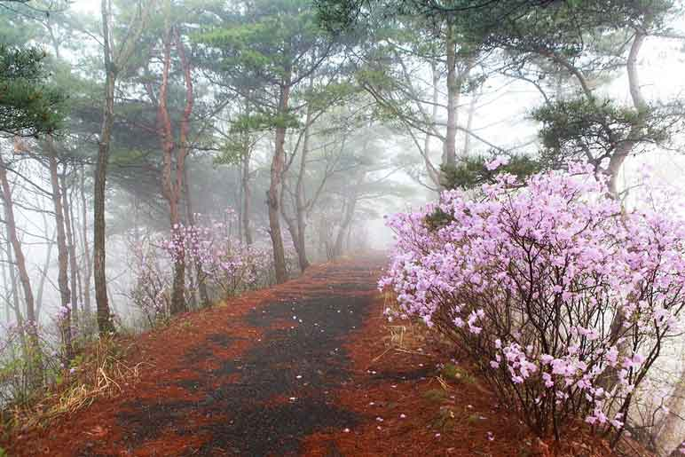 Hiking trail on Gamram Mountain during spring. It is foggy in Wolmyeongdong!