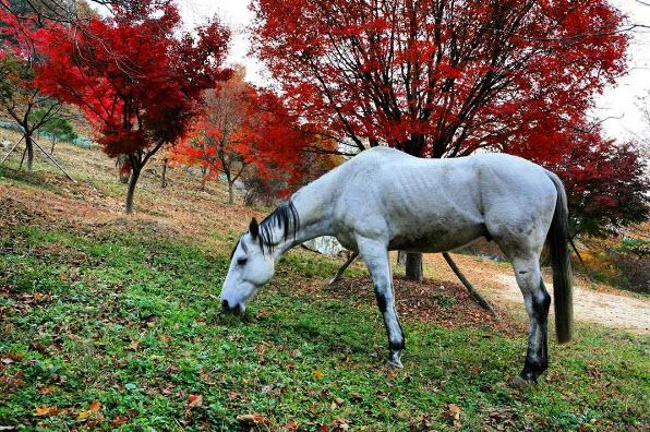 Feeding a horse in Wolmyeongdong