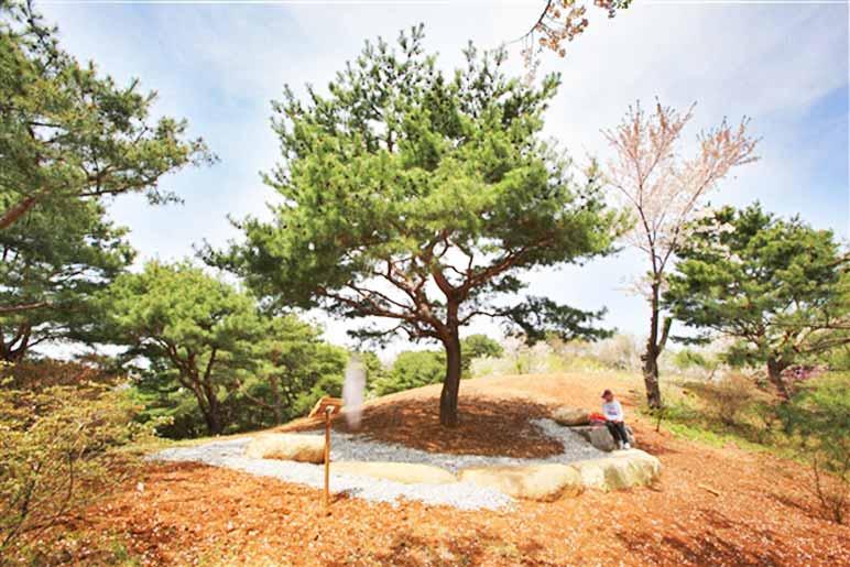 Prayer Miracle Pine