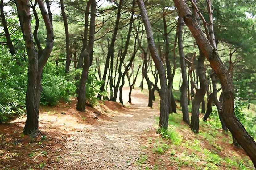 A hiking trail in Wolmyeongdong