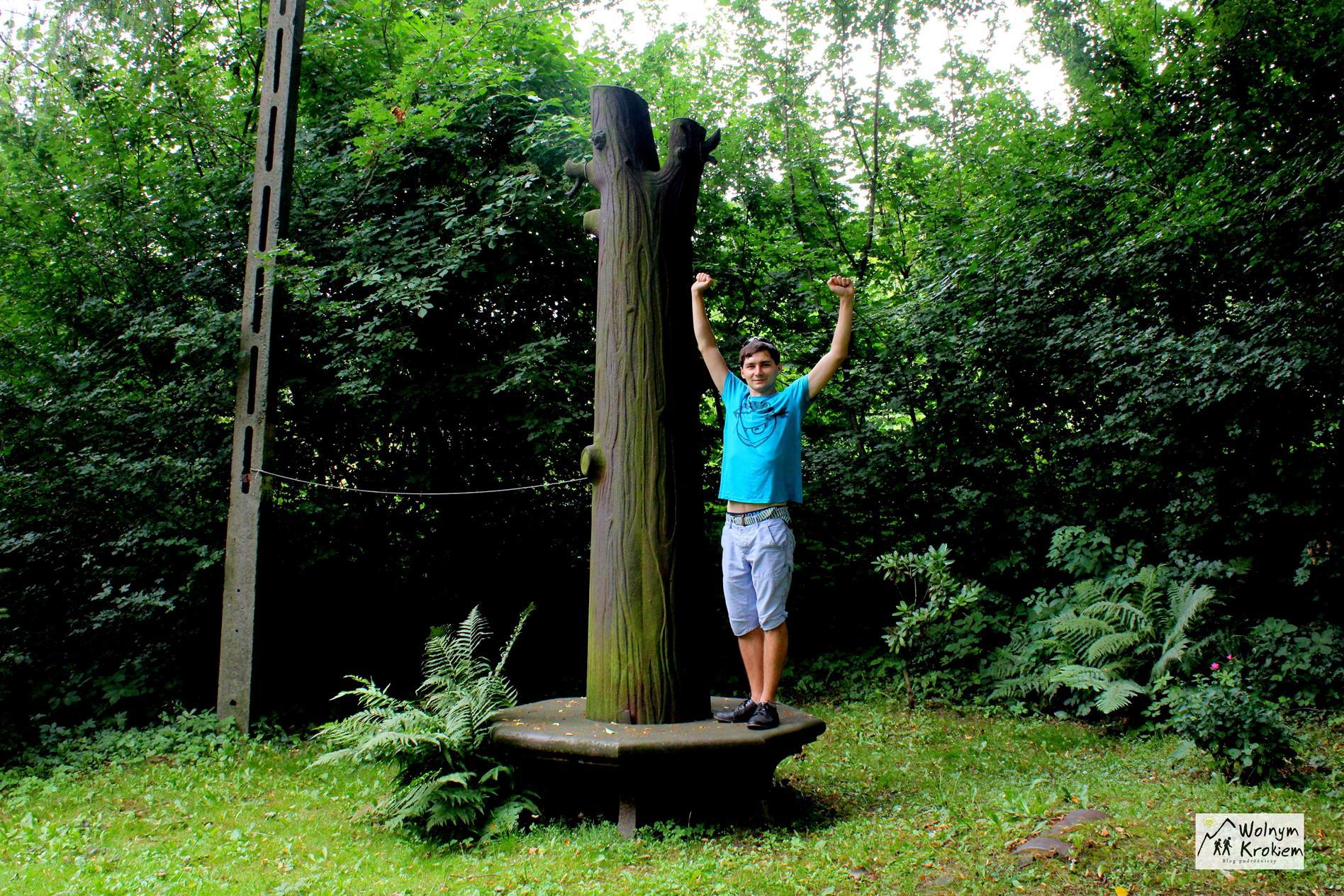 Żelazne Drzewo (Lipa Fryderyka) w Podlesiu