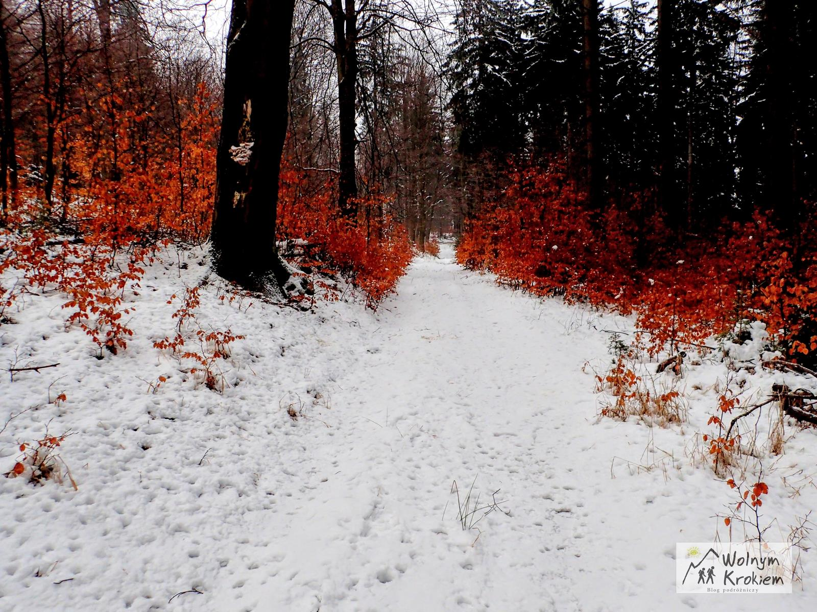 Szlak na Włodarza - Kompleks Soboń