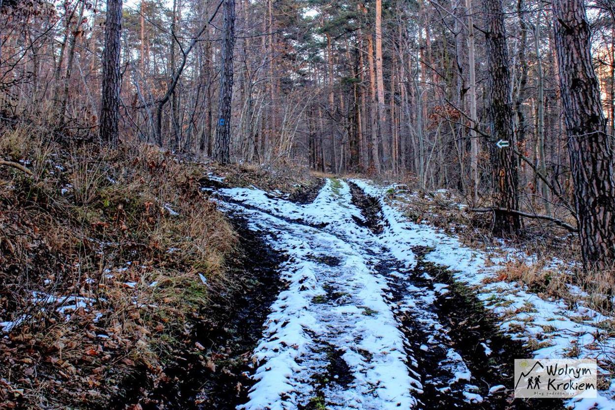 Zielony szlak na Brzeźnicę w Sudetach